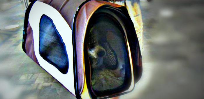 Viajar con perros en aviones