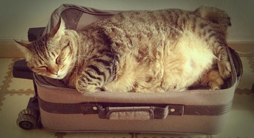 Condiciones para emigrar con mi gato